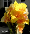 yellow20orange20canna 01 - Why you should be thankful for the things you hate!