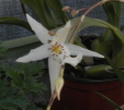 one bloom on an orchid stem with more to come, just like good intimacy