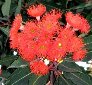 orange cluster spiked tree flower